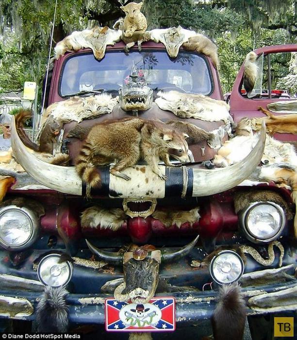 «Чучеломобиль» - таксидермия с размахом (11 фото)