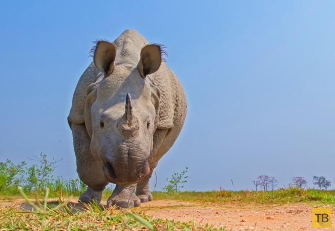 Красивые фотографии с животными (12 фото)