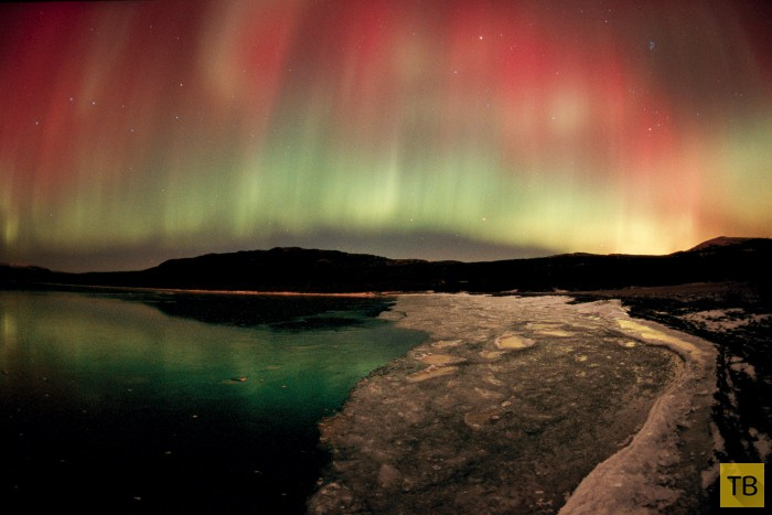 Изумительные фотографии дикой природы от фотографа-полярника Пола Никлена (33 фото)