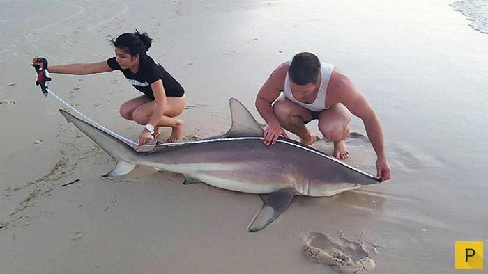 видео как ловят акул видео