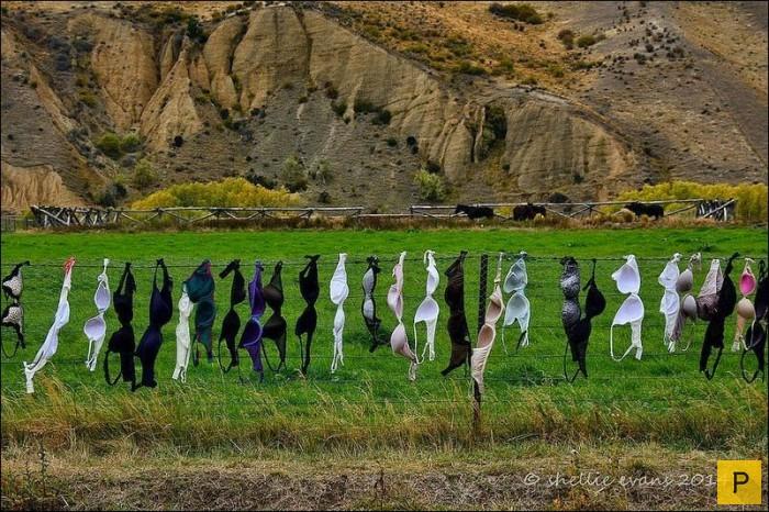Забор бюстгальтеров в Новой Зеландии (9 фото)