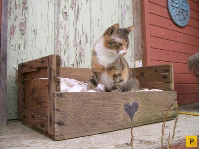 Лежак для кошки из дерева