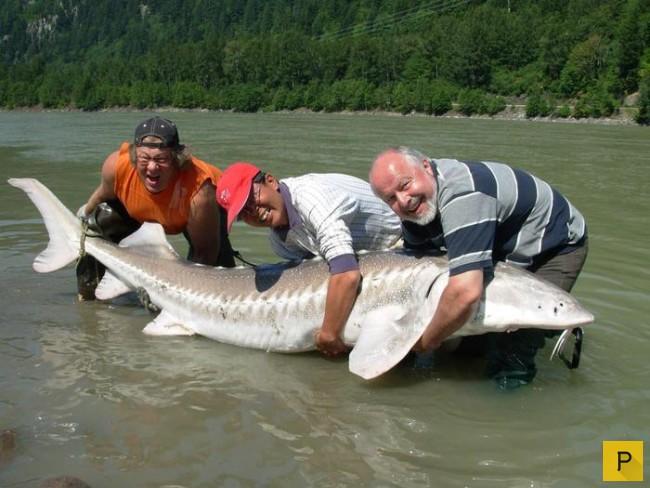 Сережа Ира ютуб крупные экземпляры рыб выловленые в волге видио сделана пластика