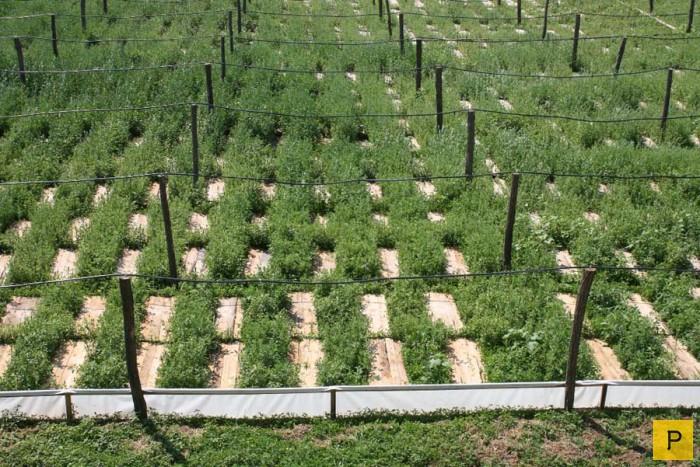 Выращивание в домашних условиях виноградных улиток