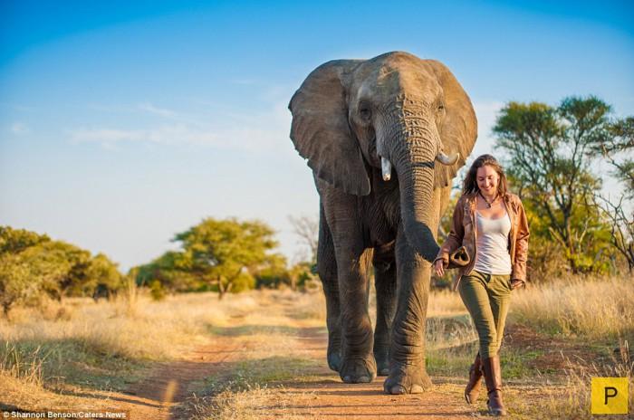 Рискованные фотографии с дикими животными от Шеннон Бренсон (15 фото)