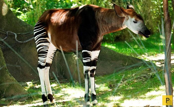 Фото самых редких животных россии