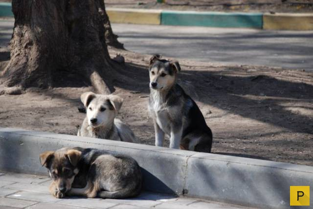 Russian World Cup host cities to slaughter stray dogs en