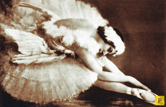 anna pavlova and the dying swan