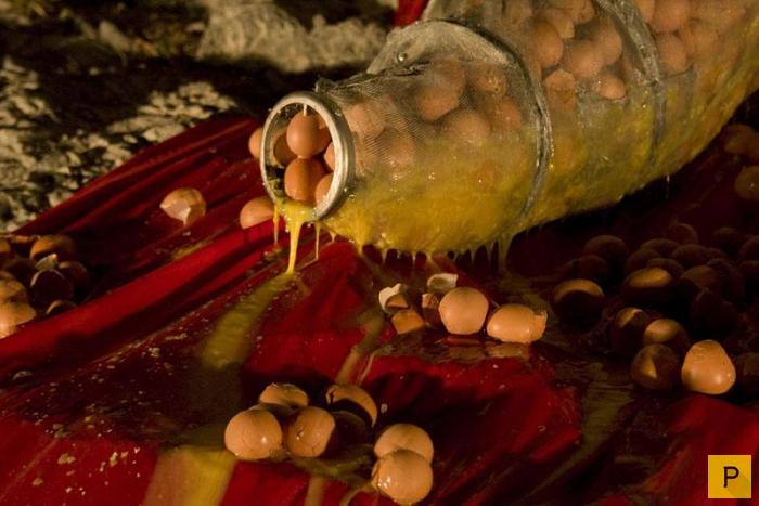 (18+) Странное современное искусство - яичный перфоманс (7 фото)