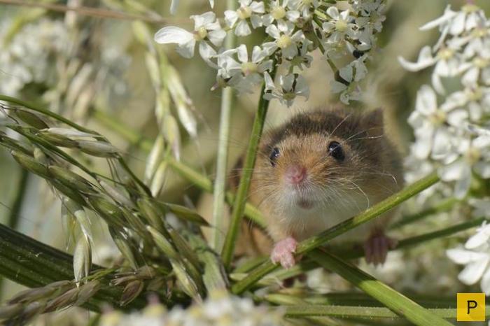 Победители престижного фотоконкурса дикой природы British Wildlife Photographer of the Year 2016 (16 фото)