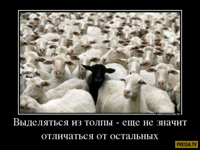 Демотиваторы от 10.11.2016 (51 фото)