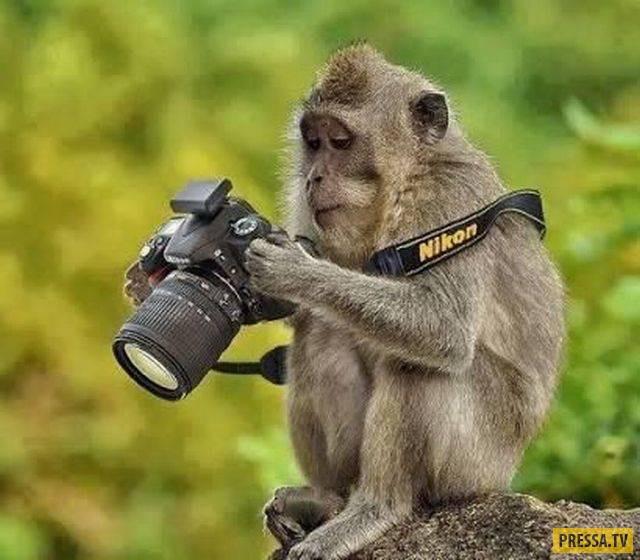 Утренний заряд позитива - забавные фотографии со всего света (100 фото)