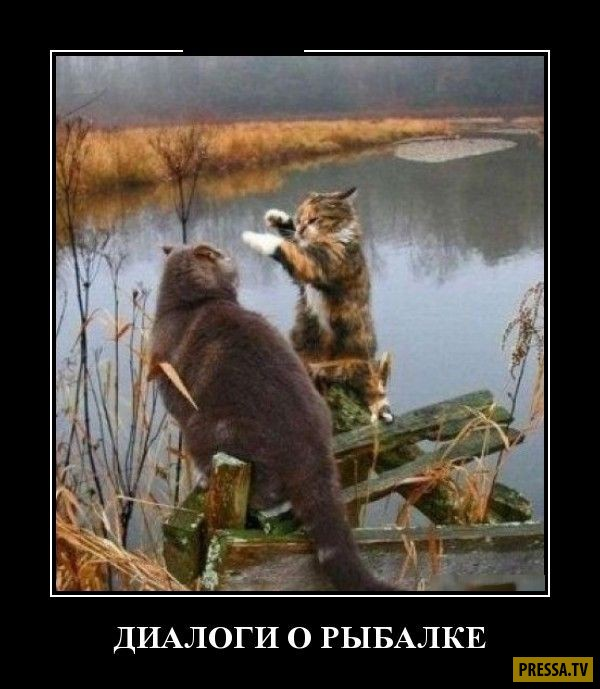 рыбалки не будет картинки
