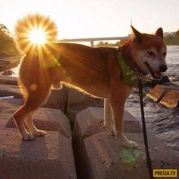 Утренний заряд позитива - забавные фотографии со всего света, часть 2 (101 фото)