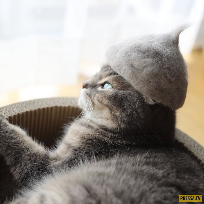 Кошки в шляпах из своей собственной шерсти (13 фото)
