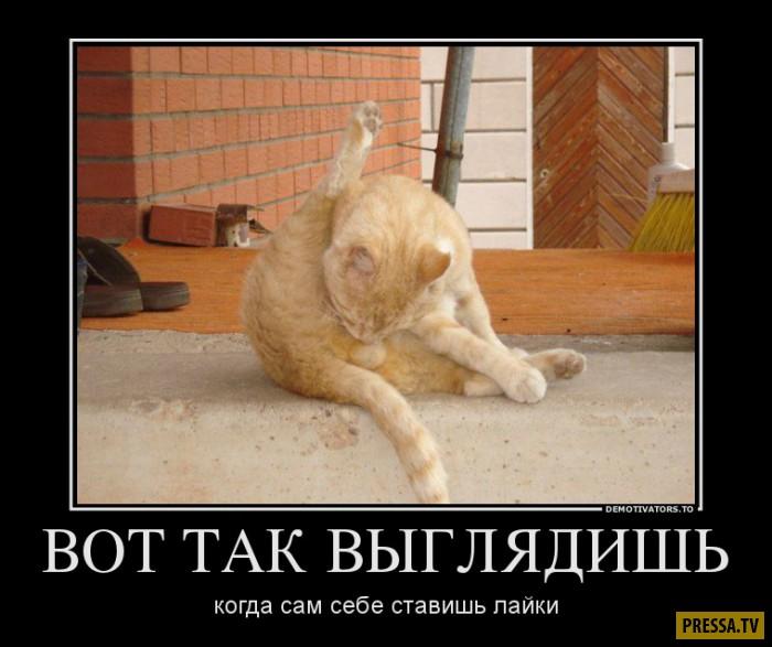 Демотиваторы от 01.12.2016 (45 фото)