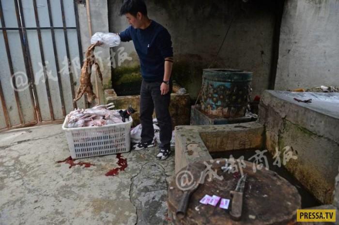Кроличье мясо из кошки. Китайский живодер убивал бродячих кошек (15 фото)