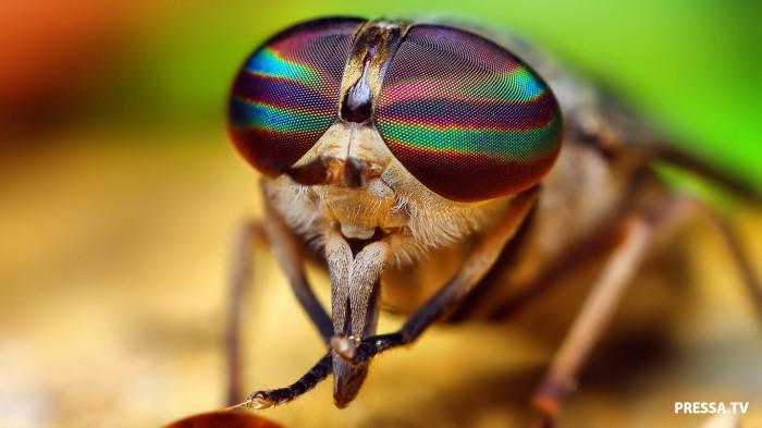 Ферма, где разводят мух (14 фото)