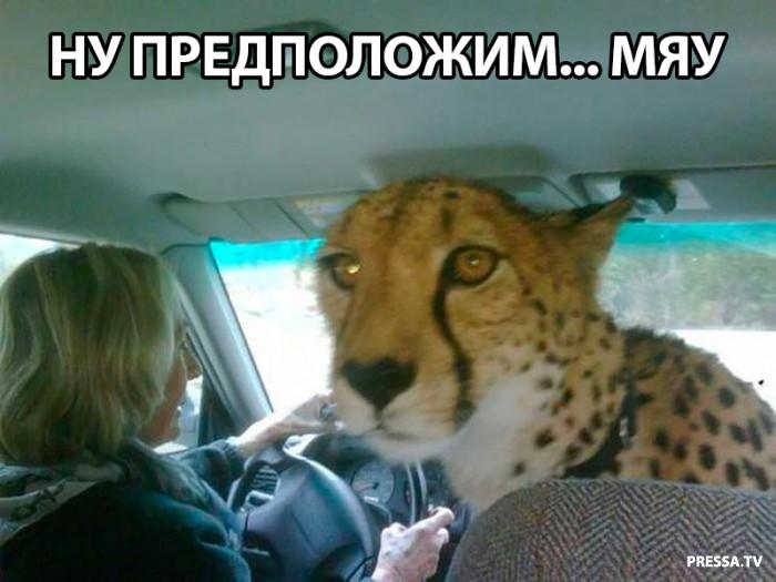 Автоприколы с Российских дорог (38 фото)