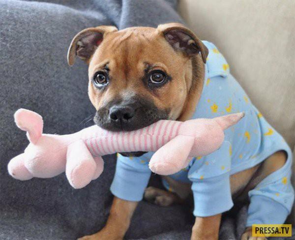 Милые щеночки в пижаме (30 фото)