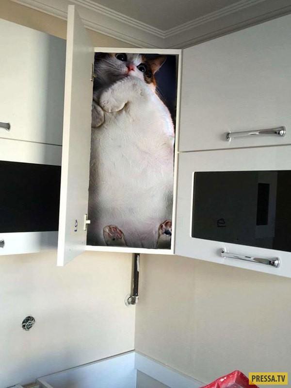 Фотожаба на сборщика кухонной мебели (26 фото)