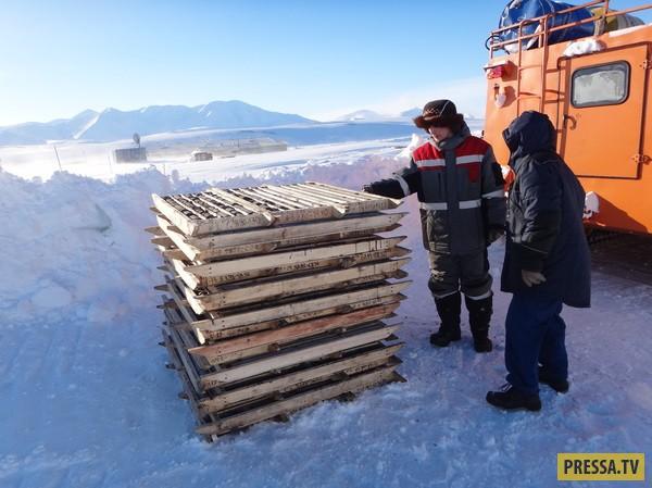Как разведывают угольное месторождение на Чукотке (25 фото)