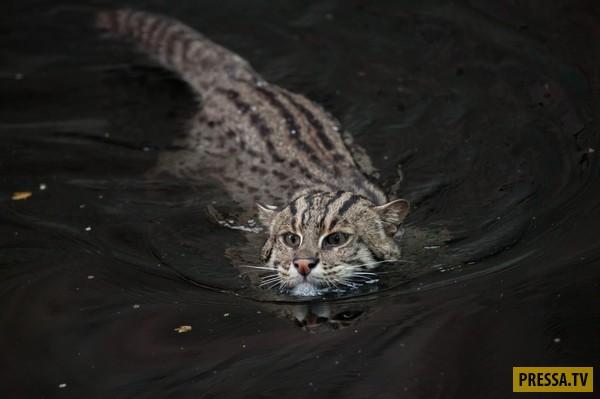 Котенок, найденный на улице, оказался совсем не тем, кем казался (10 фото)