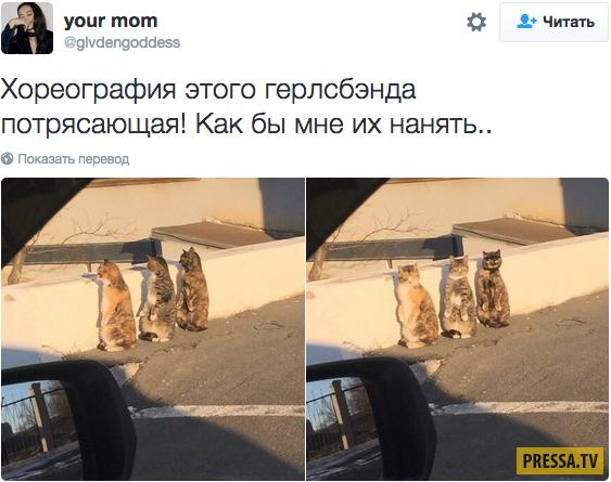 23 лучших твита о кошках за 2016 год
