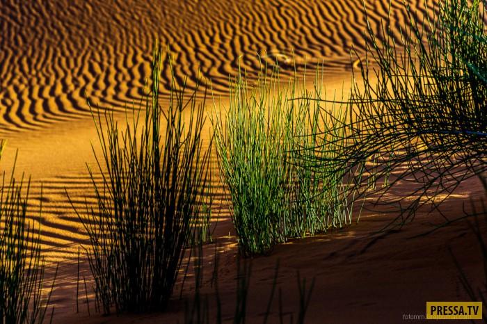 Сахара — крупнейшая на Земле пустыня, прогуляемся по пескам времени (25 фото)
