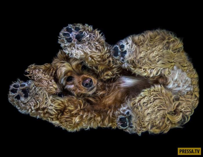 Фотографии собак в забавном ракурсе (11 фото)