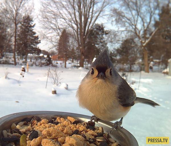Поставил кормушку за окном и весь год фотографировал птиц (23 фото)