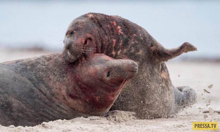 Красочные фотографии животных с разных уголков планеты (13 фото)