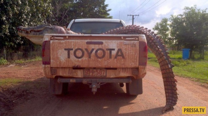 Каждое австралийское животное хочет убить вас (16 фото)