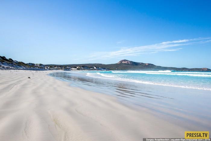 Пляж с кенгуру в бухте Lucky Bay на австралийском Диком Запад (20 фото)