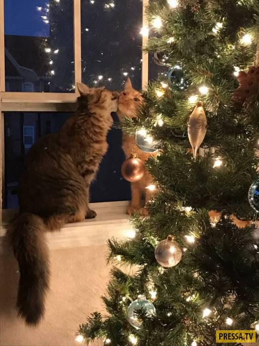 Мурчащие новогодние коты (13 фото)