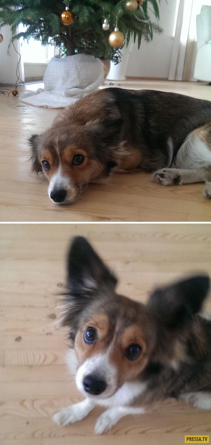 Реакция собак на слова: Хороший мальчик (16 фото)