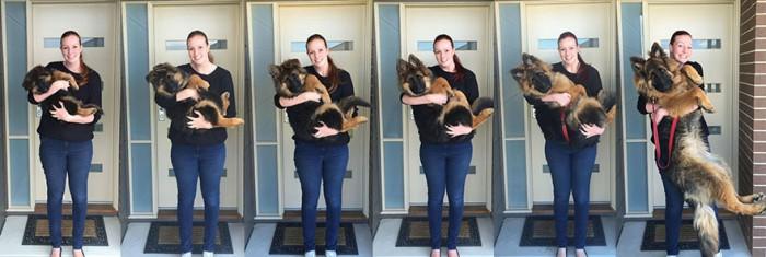 Серия фотографий о том, как быстро выросла собачка (6 фото)