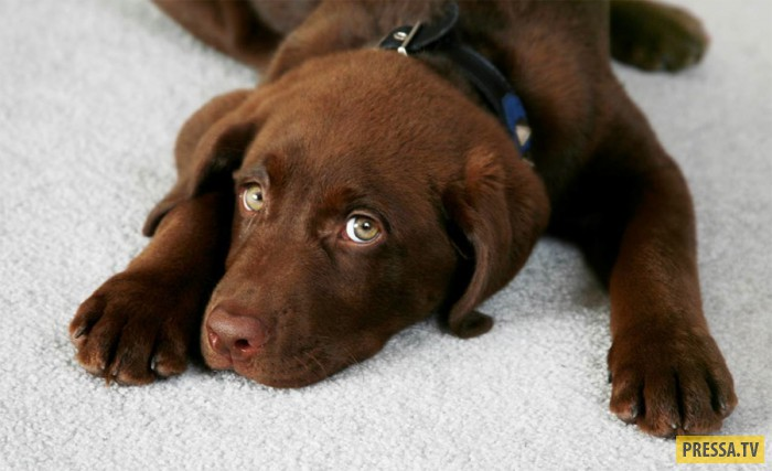 ТОП-10 советов владельцам собак (10 фото)