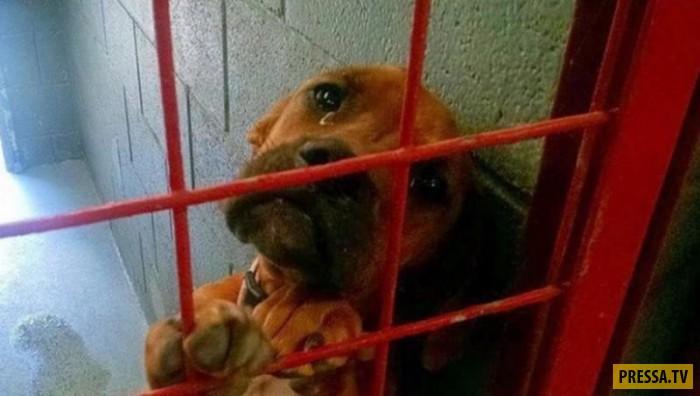 Благодаря Интернету, жизнь еще одной несчастной собаки круто изменилась (2 фото)