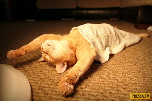 Где и как спят коты (30 фото)