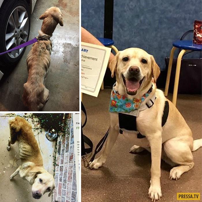 Что может сделать любовь - истории спасения собак (50 фото)