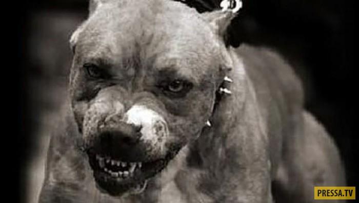 В Москве собака питалась телом погибшего хозяина
