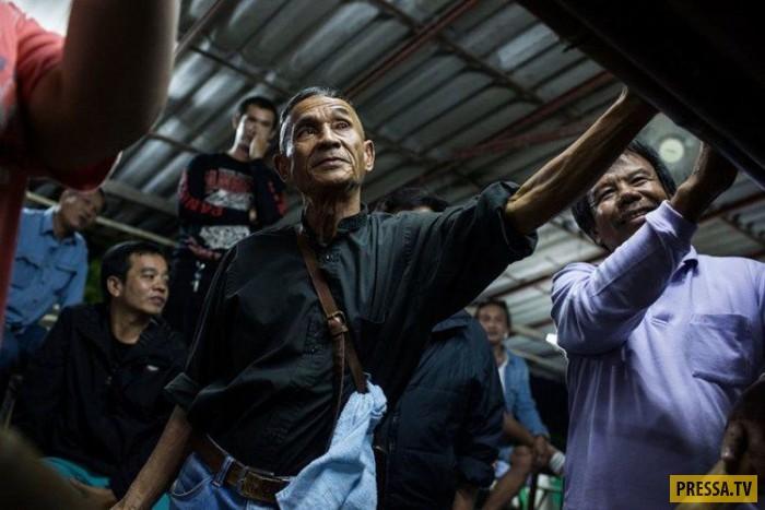 Народное развлечение в Таиланде, драка жуков (13 фото)