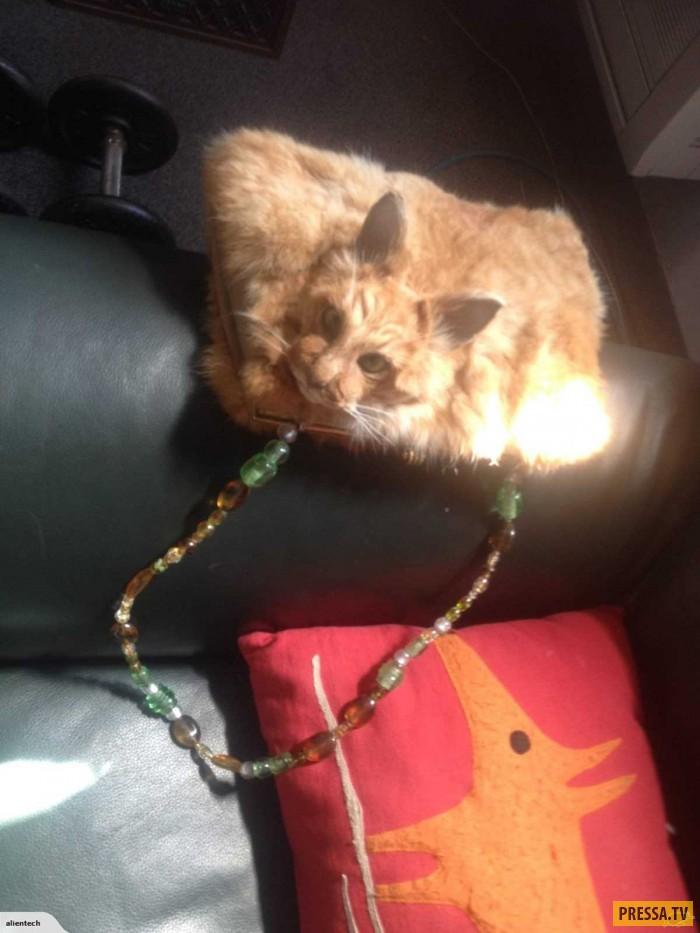 Таксидермист Клэр Хоббс  сделала сумку из мертвой кошки. Впечатлительным не смотреть! (4 фото)