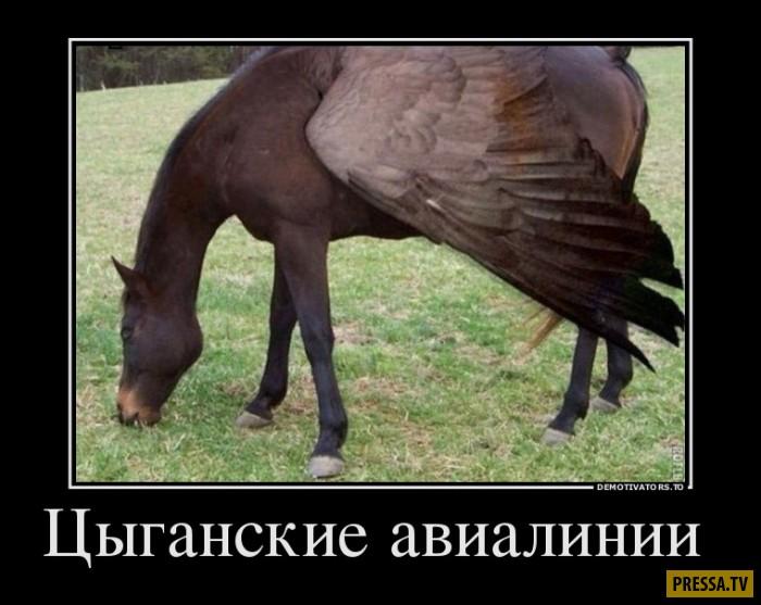 Демотиваторы от 12.01.2017 (50 фото)