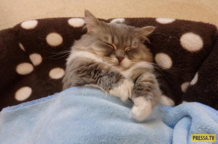 Коты спящие в постели