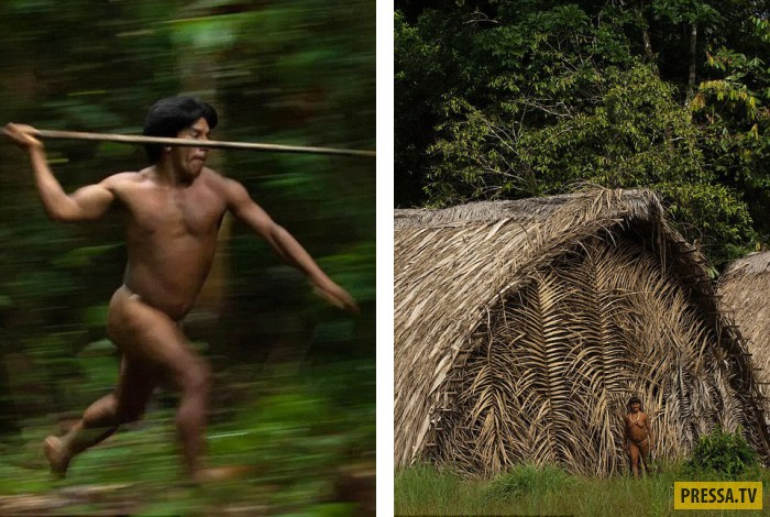 задачи дикие лесные племена амазонки помидоров