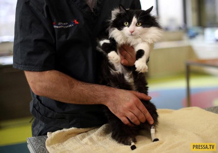 Уникальный кот на протезах из Болгарии (8 фото)