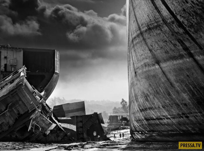 Опасные фотографии дикой природы в работах Дэвида Ярроу  (14 фото)