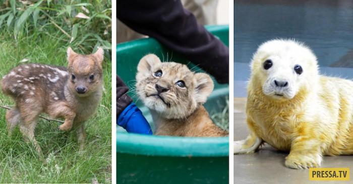 Милые зверюшки - обитатели американских зоопарков (17 фото)